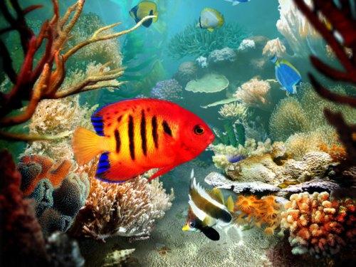Unterwasserwelt der Kanaren