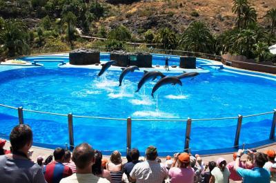 Delfinshow Palmitos Park