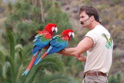 Papageienshow Palmitos Park